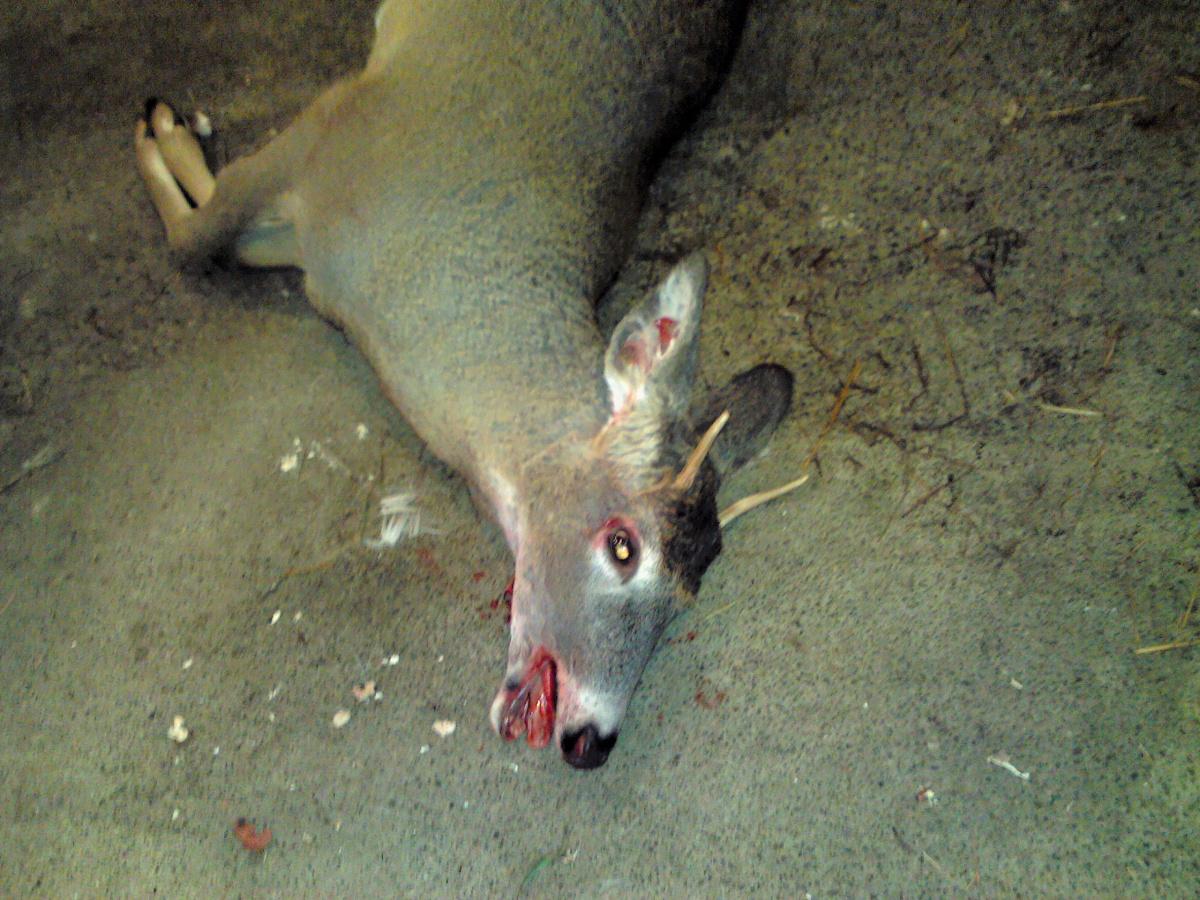 Deer sausages-1119191723.jpg