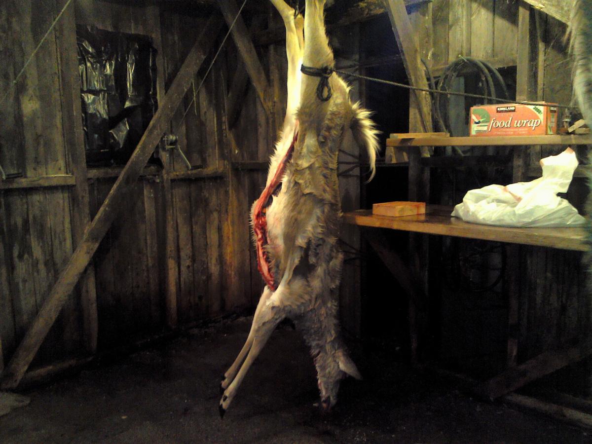 Deer sausages-1120191807.jpg