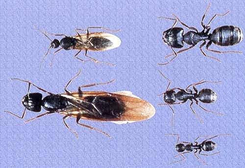 Ants upstairs in bathroom. - Plumbing Zone - Professional ...