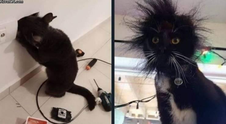 The random pic thread-cat-f.jpg