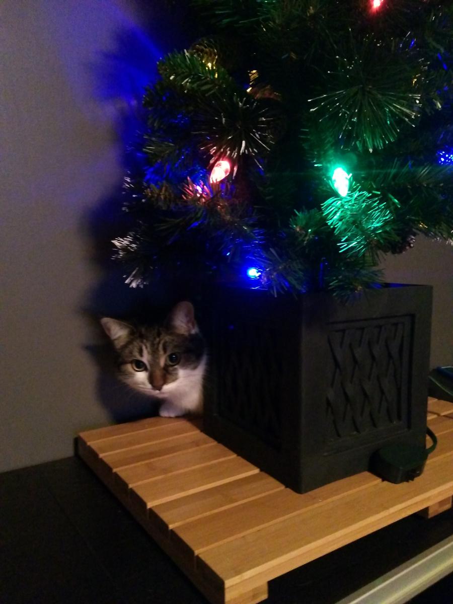 Merry Christmas-christmas-cat-5-.jpg