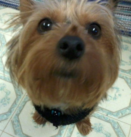 Show your pet thread....-gizmo-cropped.jpg