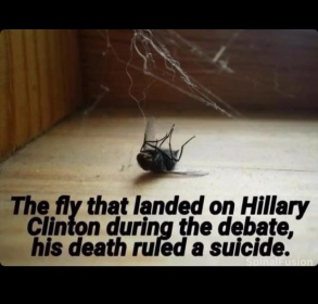 NOT POLITICAL BUT FUNNY..fly on clinton-image.jpg