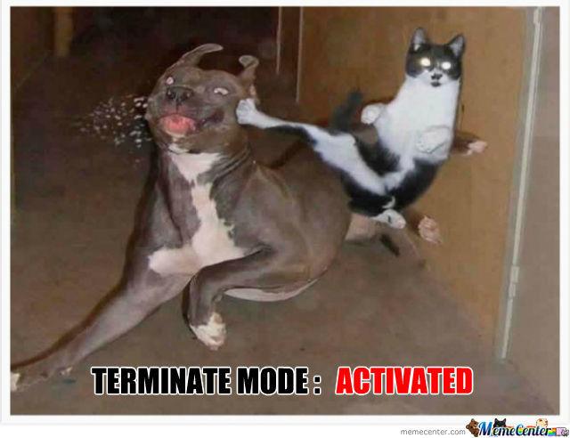 Frozen PEX pipe burst.-terminator-cat_o_500305.jpg
